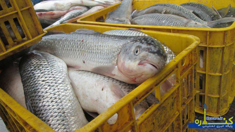 گروه ترکمن در تلگرام بازار داغ ماهی فروشان بندرترکمن در روزهای پایانی سال/تصاویر